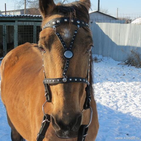 Уздечка своими руками на лошадь 4