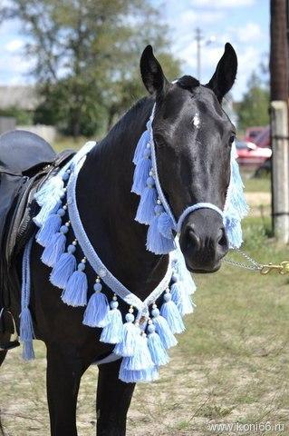 Украшение лошади фото